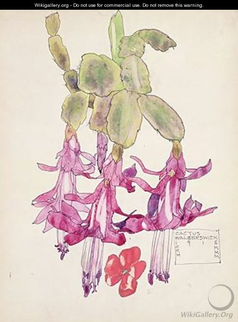 Cactus Flower - Charles Rennie Mackintosh