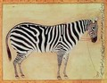 Zebra from the Minto Album Mughal 1621 - (Ustad Mansur) Mansur