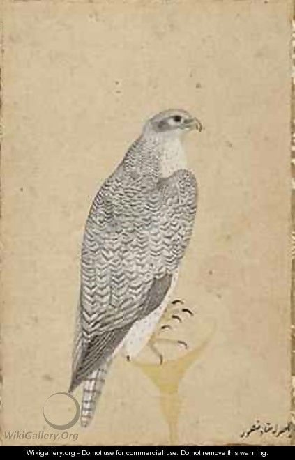 Portrait of a Falcon from Northern India 1619 - (Ustad Mansur) Mansur