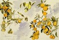 Orange Trees - Edward Lear