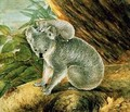 Koala and Young - John William Lewin