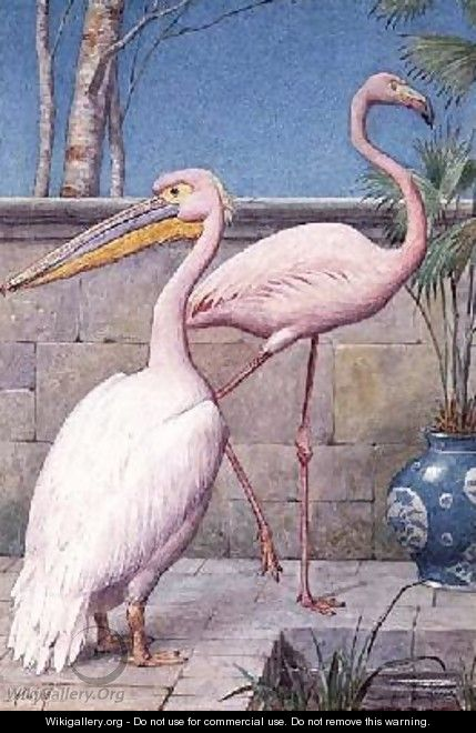 Pelican and Flamingo - Henry Stacy Marks