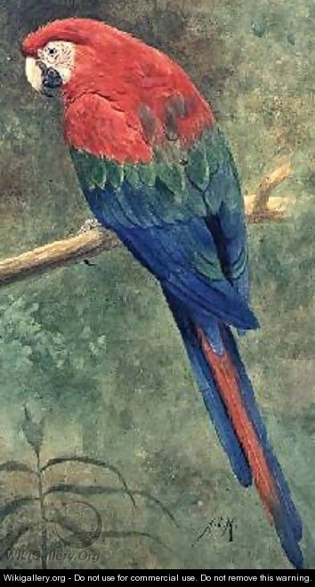 Red and Blue Macaw - Henry Stacy Marks