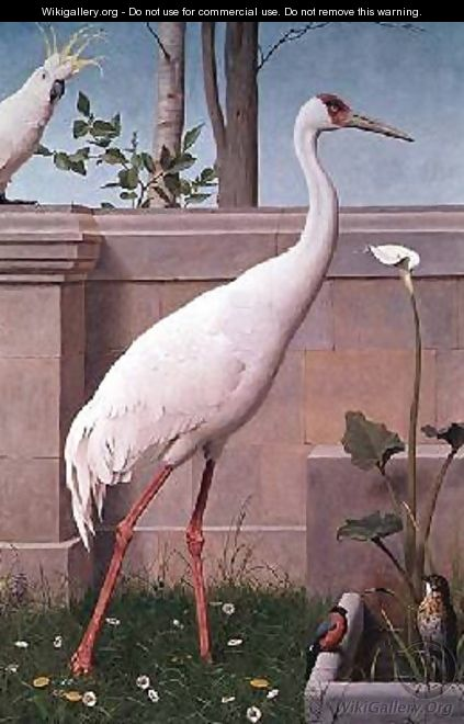 Indian Crane Cockatoo Bullfinch and Thrush - Henry Stacy Marks
