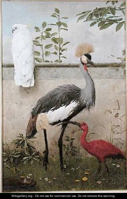 Cockatoo Crested Crane and Scarlet Ibis - Henry Stacy Marks