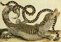Alligator and Snake 1730 - Maria Sibylla Merian