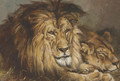 Sketch for 'Lion and Lioness Resting' - Geza Vastagh