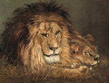 A lion and lioness resting - Geza Vastagh