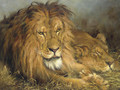 A Lion and a Lioness - Geza Vastagh