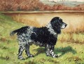 Jim, a Springer Spaniel - George Paice