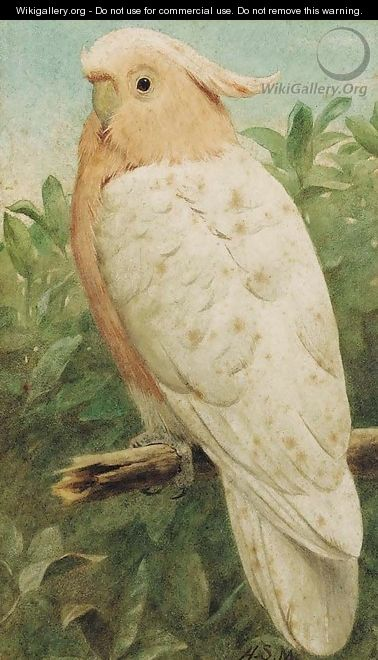 Pink cockatoo - Henry Stacy Marks