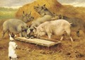 Feeding time - Herbert William Weekes