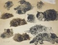 Playful poses Studies of kittens - Henriette Ronner-Knip