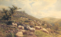 Sheep grazing in a Hilly Landscape - Henry Birtles