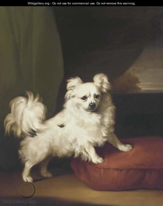 A White Papillon standing on a cushion - Henry Bernard Chalon
