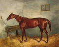 Thunderbolt, a chestnut racehorse in a stable - Harry Hall