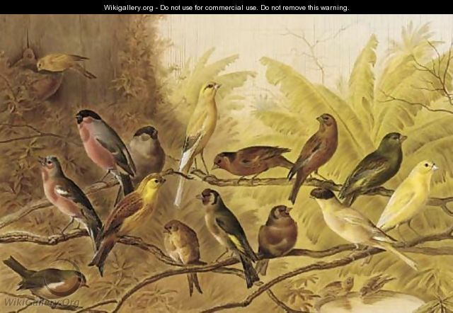 A chorus of song birds in an aviary - Henry Bright