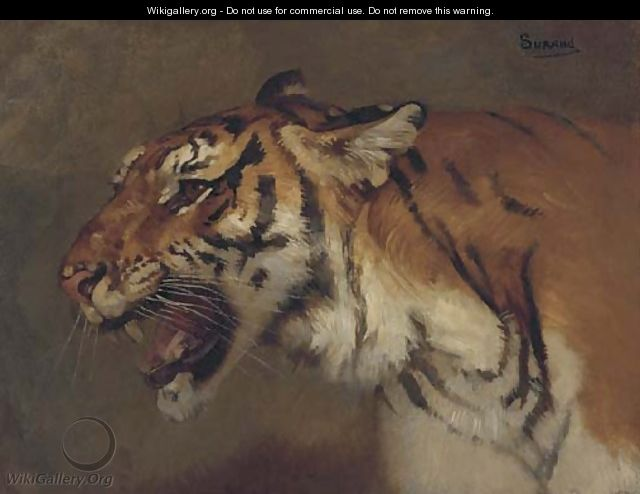 Tigre rugissant - Gustave Surand