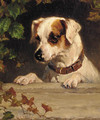 An inquisitive terrier - George Holmes