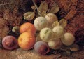 Plums and greengages - George Clare