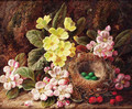 Primroses, apple blossom, and a bird's nest, on a mossy bank - George Clare