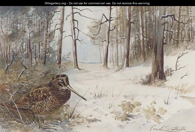 Woodcock in winter - Frank Southgate