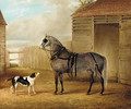 A saddled grey horse and a dog by a barn - John Vine