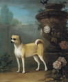 A pug beside an classical urn - John Wootton