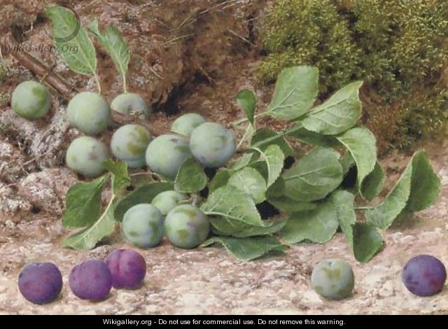 A bough of plums on a mossy bank - John Sherrin