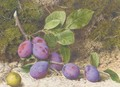 A bough of plums and an apple on a mossy bank - John Sherrin