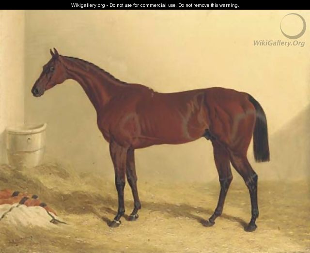Bay Middleton, a bay racehorse in a loose box - John Frederick Herring Snr