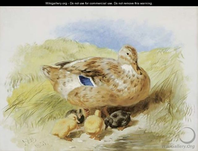 A Duck And Ducklings - John Frederick Herring Snr