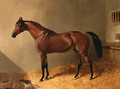 Pacolet, A Bay Stallion, in a Stable - John Frederick Herring Snr
