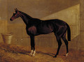Lucetta, a bay racehorse in a stable - John Frederick Herring Snr