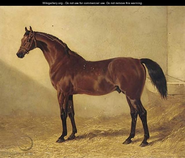 Glaucus, a bay racehorse in a stable - John Frederick Herring Snr