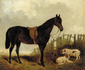 A saddled dark brown hunter with two dogs in a landscape - John Frederick Herring, Jnr.