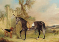 A saddled grey hunter with a dog before a gothic gateway - James Edward Freeman