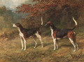 Chorister and Norman, one couple of fox hounds beside a covert - Heywood Hardy
