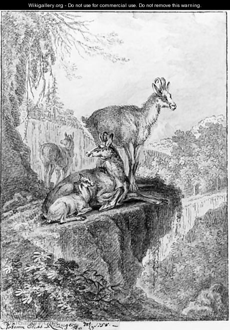 Chamois in a rocky wooded Landscape - Johann Elias Ridinger or Riedinger