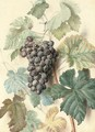 White Sweetwater grapes - James Sillett