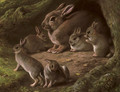 Rabbits in a wood - John Carter