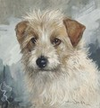 Busty, the head of a wire haired terrier - Binks, R. Ward