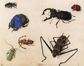 Beetles - Pieter The Elder Holsteyn