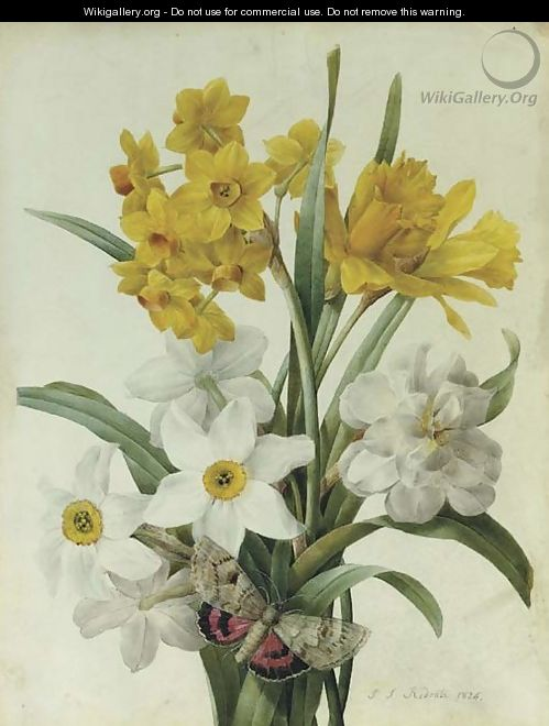 A bouquet of daffodils and narcissi with a red underwing moth - Pierre-Joseph Redouté