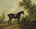 A saddled bay hunter in a wooded landscape - Sawrey Gilpin