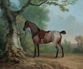 A saddled strawberry roan hunter, tethered to a tree, in a landscape - Sawrey Gilpin