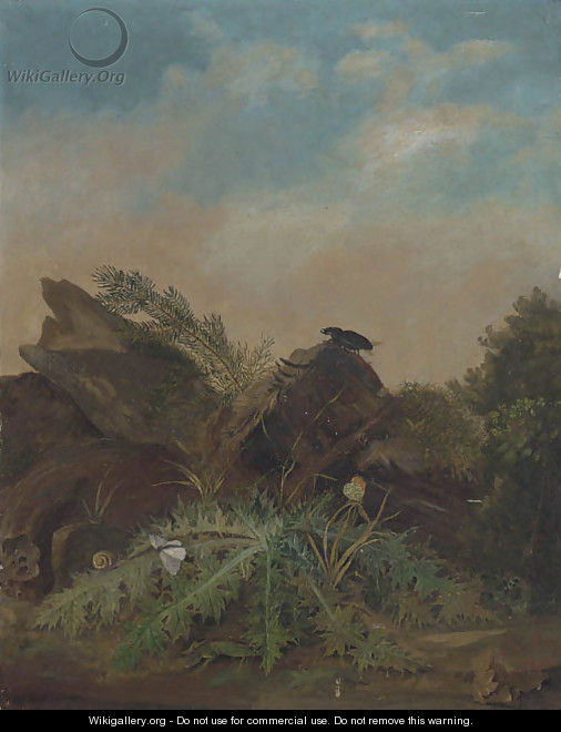 Study Of Butterflies, A Lizard, Snail And A Beetle On A Rocky Outcrop - William James Muller