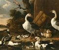 Chinese and Egyptian Geese - Melchior D'Hondecoeter