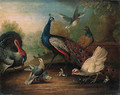 A Peacock, a Turkey, a Hen, Doves, Chicks and a Pheasant by a Lake - Marmaduke Cradock