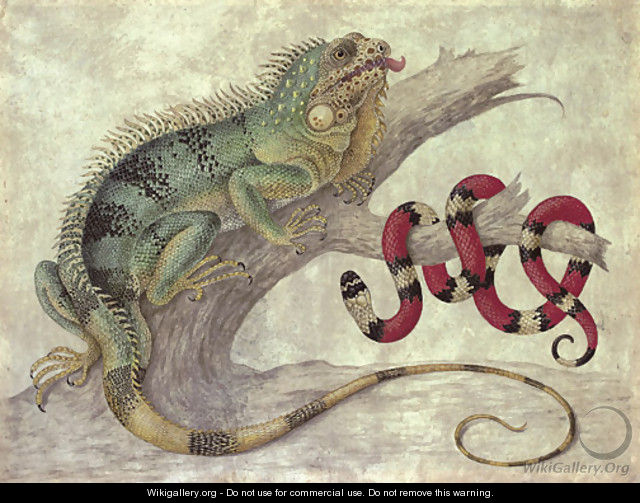 An Iguana (Iguana iguana) and a Coral snake (Elapidae micrurus) on a tree stump - Maria Sibylla Merian